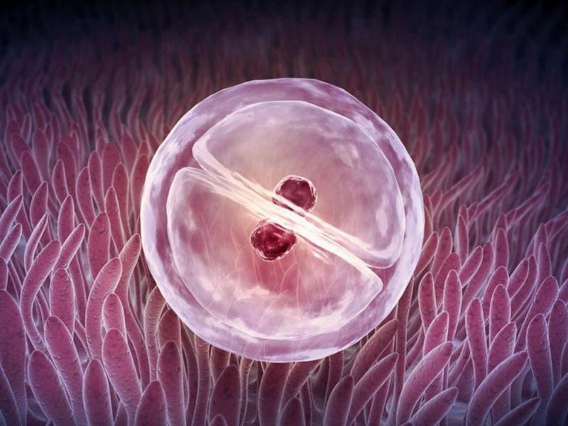 Υποβοηθούμενη Αναπαραγωγή Υπογονιμότητα - Γονιμότητα Εξωσωματική Γονιμοποίηση Αθήνα Ελλάδα PELARGOS IVF